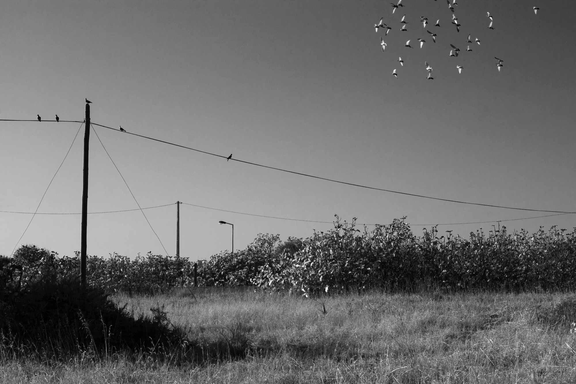 Vögel auf Stromleitung und in der Luft, Algarve