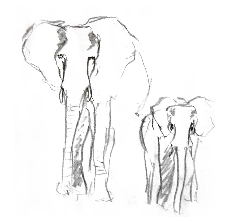 Bleistiftzeichnung Elefanten