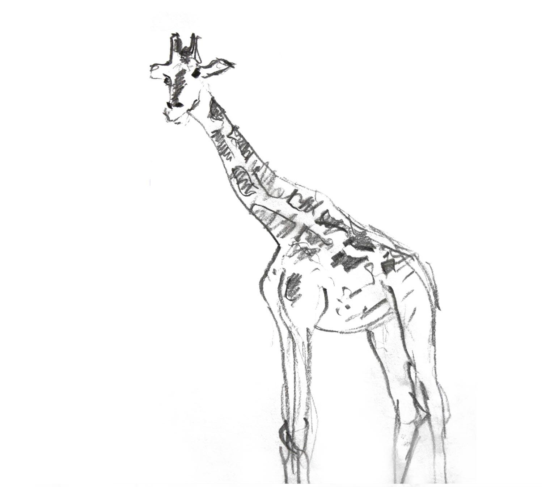 Bleistiftzeichnung Giraffe