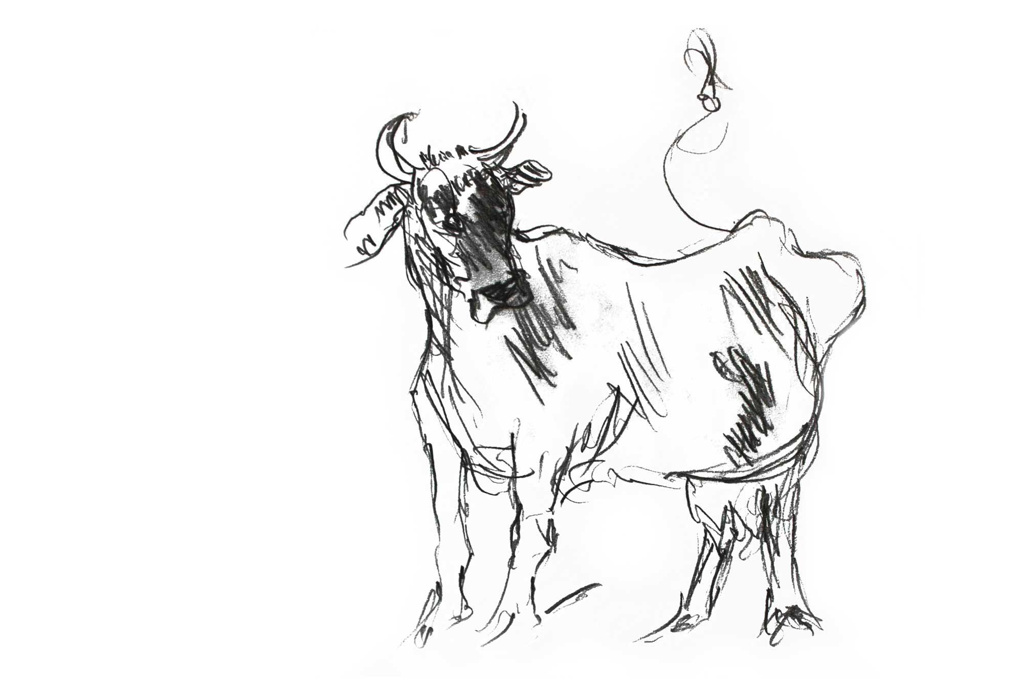 Bleistiftzeichnung Kuh